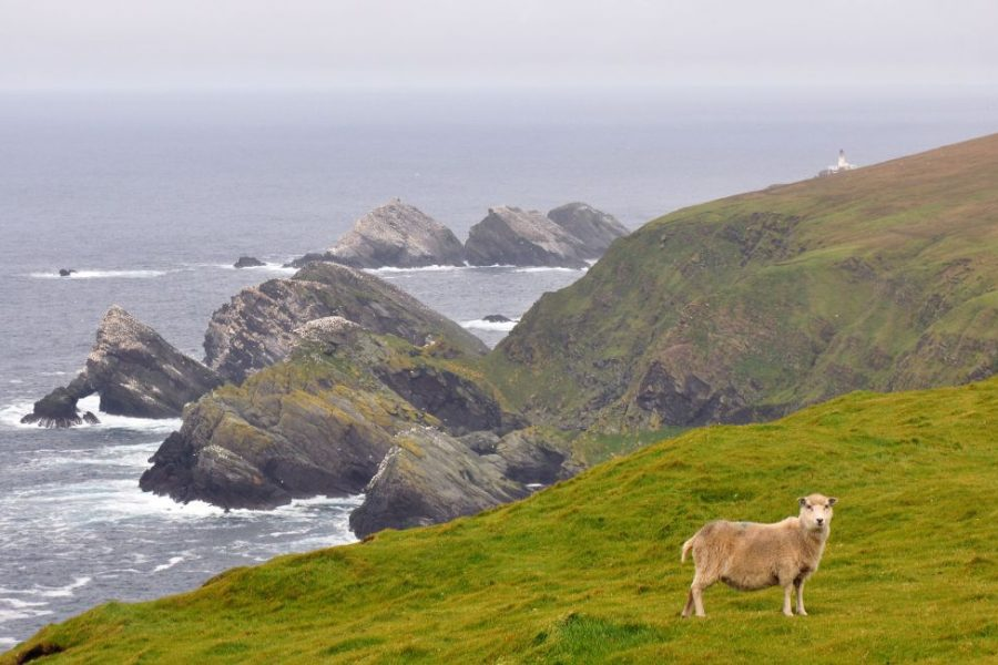 Do a trip to Shetland and drive yourself across the beautiful Island.