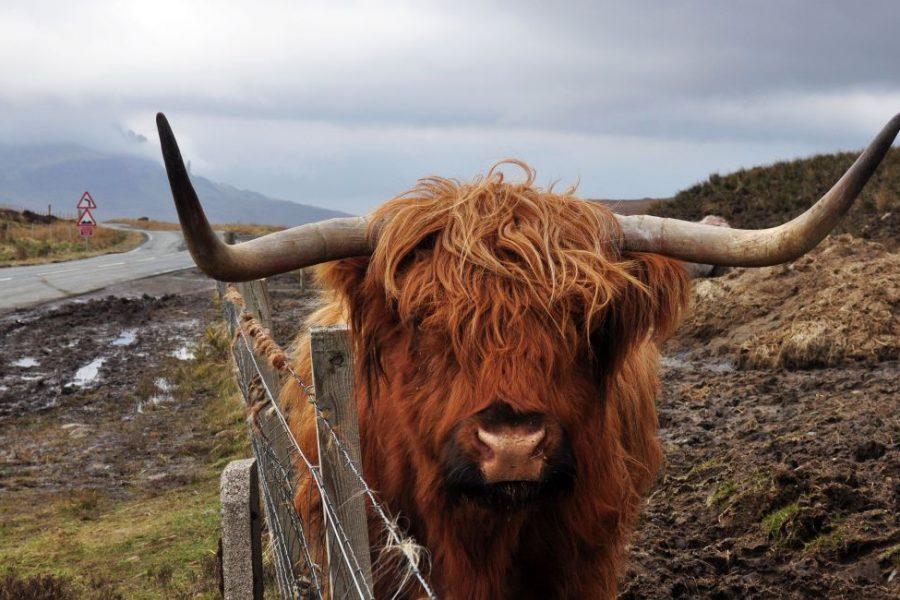 Enjoy one of our self guided tours through Scotland.