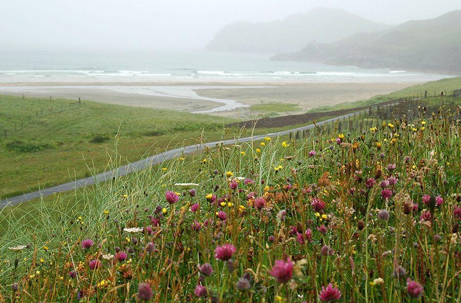 Machir sind Wildblumenwiesen, die man auf einer individuelle Rundreise auf die Hebriden vorfindet.